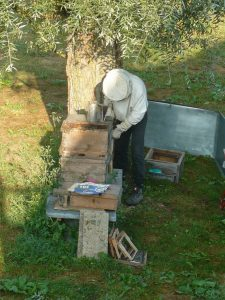 Wir halten selbst seit 1990 Honigbienen (Apis mellifera carnica) zur Bestäubung unserer Obstbäume sowie der Stauden zur besseren Samenentwicklung (Vermehrung!). Honig wird nur mäßig für den Eigenbedarf geerntet. Des Weiteren sind auf unserem weitläufigen Gelände viele Nistmöglichkeiten für Hummeln, Wildbienen und Hornissen aufgestellt sowie Nistkästen für alle Arten von Vögeln montiert. Als Imker wissen wir sehr gut, welche Stauden unseren Bienen Freude bereiten.