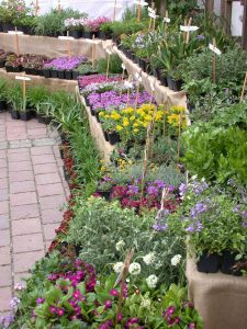 Gartenenmarkt in Herrmannsdorf südlich von München mit einem reichhaltigen Angebot an Bio-Krätern, Phlox für den Steingarten, Mittagsblumen und Taglilien
