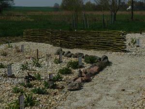Beetpflanzung der Bio-Stauden-Gärtnerei Forssman in Niederbayern . Bestellen Sie unsere Stauden (Taglilien, Mittagsblumen, Phlox etc.) online in unserem Web-Shop und der Versand bringt sie Ihnen bequem zu Ihnen nach Hause.