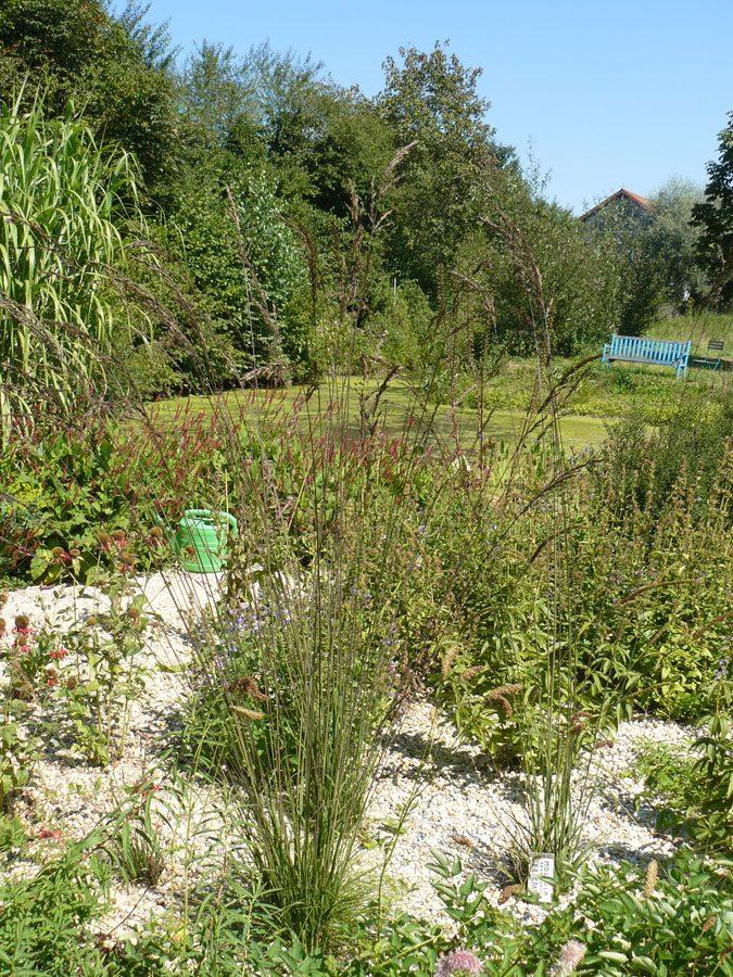 Bio Pfeifen Gras Molinia arundinacea 'Transparent' Bio Stauden Versand Forssman aus Gangkofen in Niederbayern