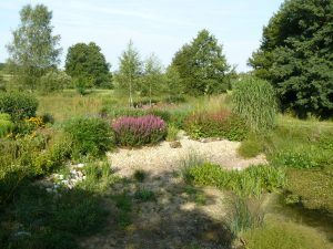 Beete bei Stauden Forssman Beste Bienen Stauden aus Bayern